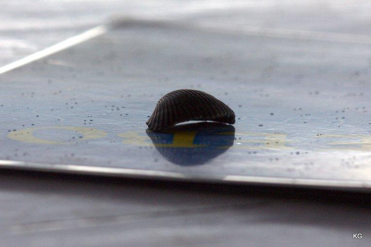 A Sea Shell