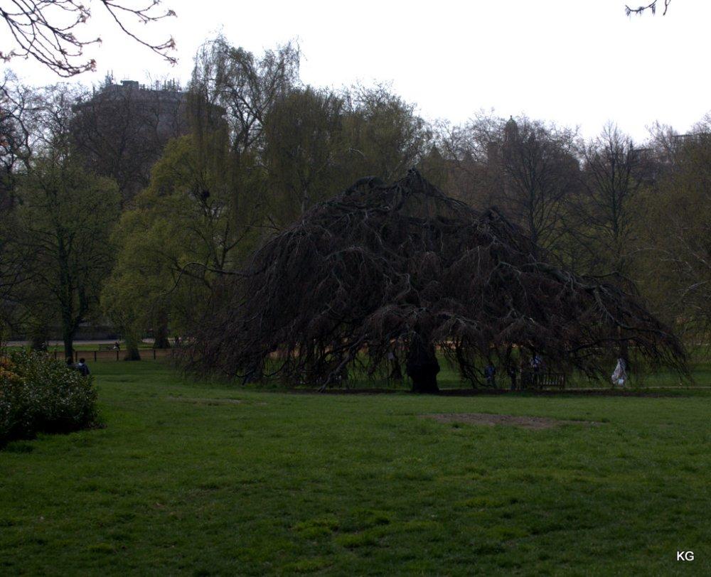Part of Hyde Park