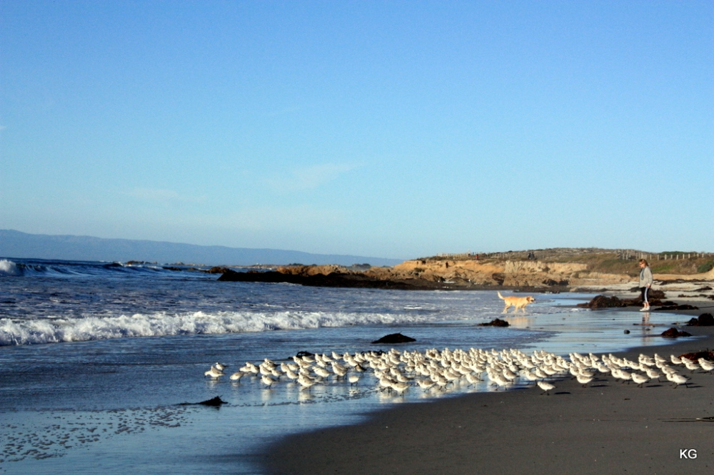 Beaches_MontereyUSA