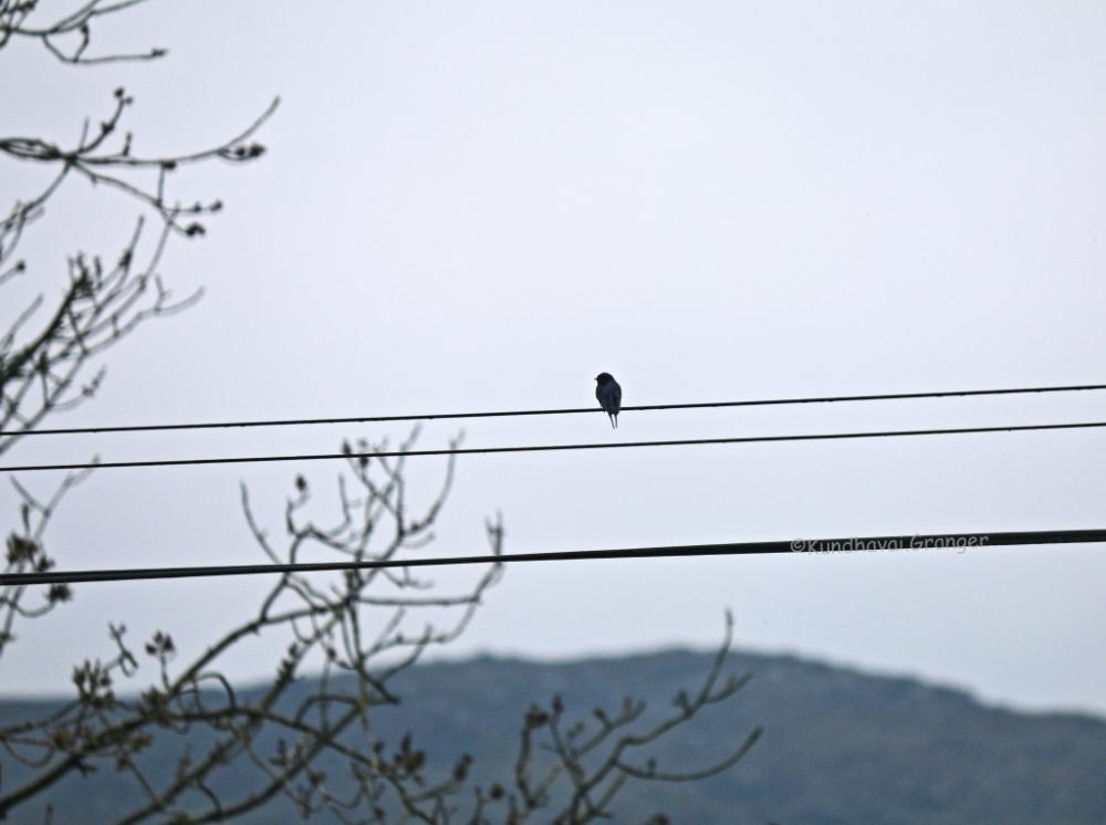ireland_bird.JPG